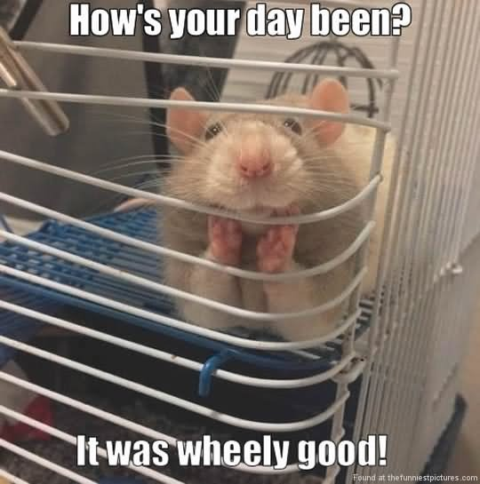 40 Very Funny Hamster Meme Images And Pictures