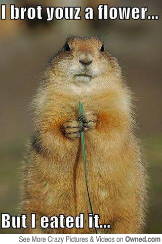 I Brot Youz A Flower But I Eated It Funny Squirrel Meme Picture 35 very funny squirrel meme pictures and images,Funny Squirrel Memes