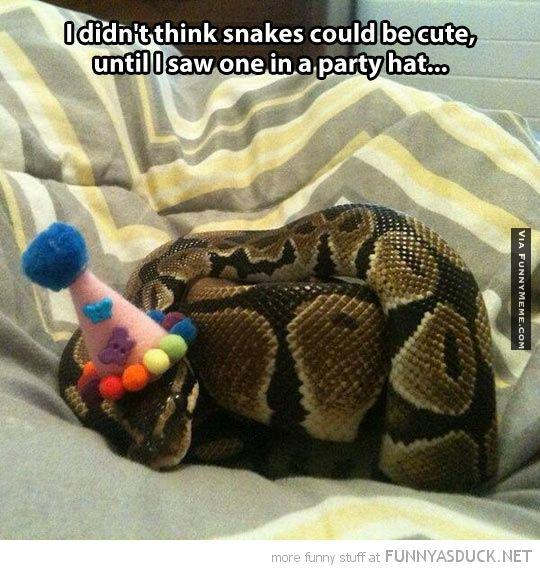 31 Most Funny Snake Meme Pictures And Images