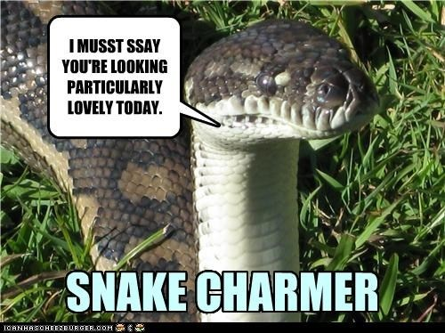 Anaconda snake meme - photo#3