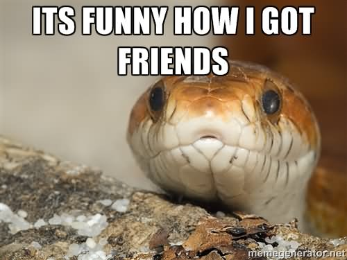Anaconda snake meme - photo#17