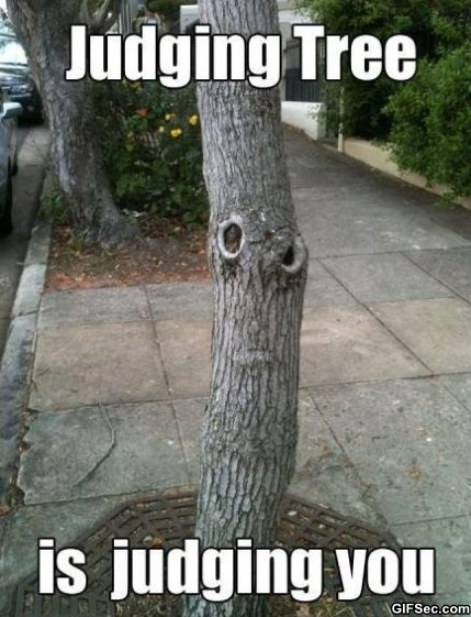 Image result for tree meme