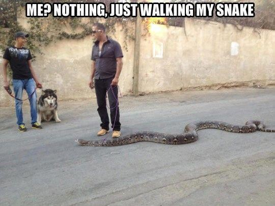 Just Walking My Snake Funny Meme Picture For Whatsapp