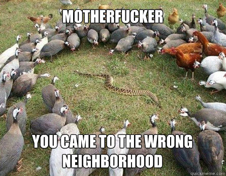 Motherfucker You Came To The Wrong Neighborhood Funny Snake Meme Image