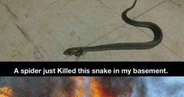 Spider Just Killed This Snake In My Basement Funny Meme Picture