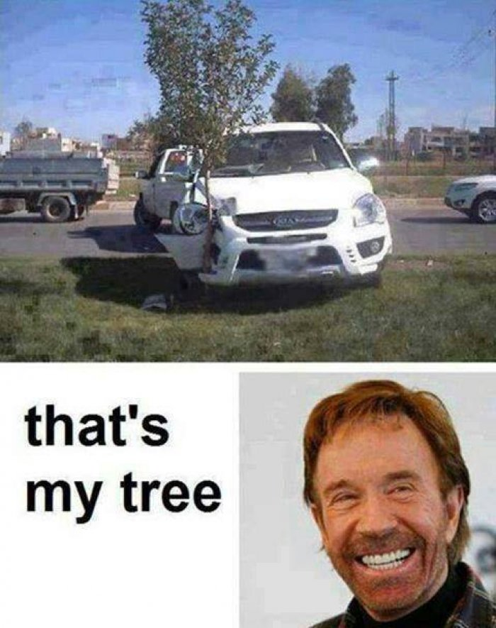 Thats My Tree Very Funny Meme Picture For Whatsapp 30 most funniest tree meme pictures and photos,Most Funny Memes