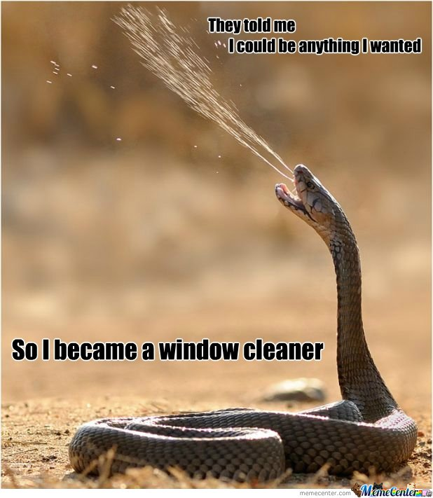 They Told Me I Could Be Anything I Wanted So I Became A Window Cleaner Funny Snake Meme Picture For Facebook