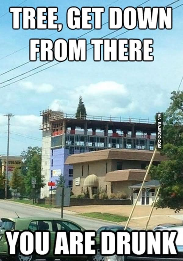 Tree Get Down From There You Are Drunk Funny Meme Picture 28 most funny tree meme photos and images of all the time,Get Down Funny Meme