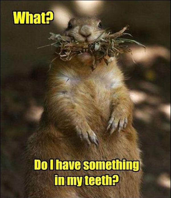 What Do I Have Something In My Teeth Funny Squirrel Meme Photo 36 most funniest squirrel meme photos that will make you laugh,Funny Squirrel Memes