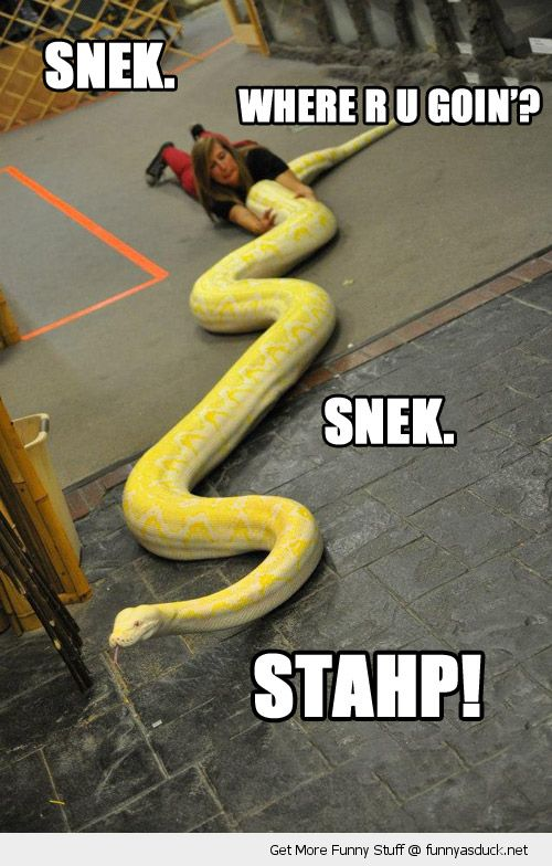 Where R U Goin Funny Snake Meme Image