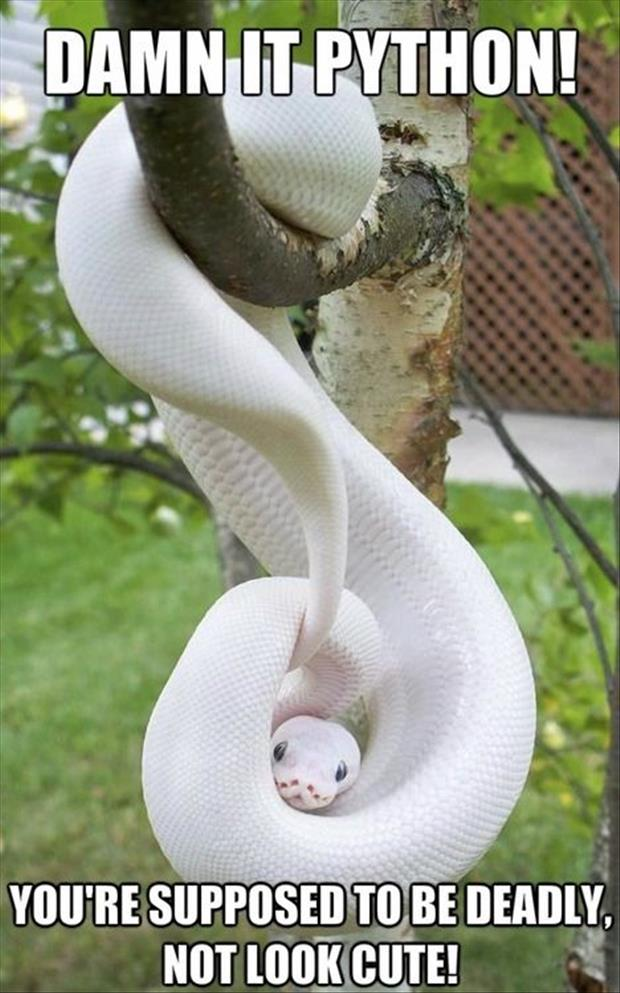 You Are Supposed To Be Deadly Not Look Cute Funny Snake Meme Photo