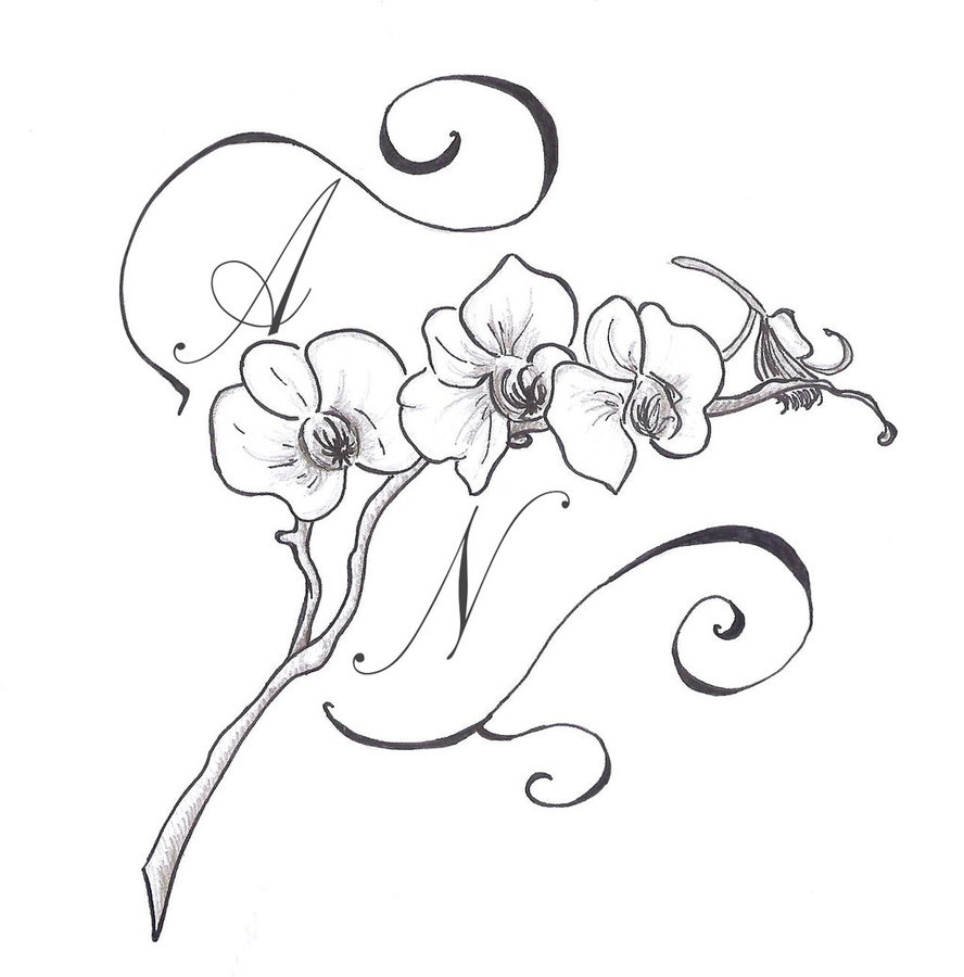 gousicteco: Orchid Drawing Outline Images