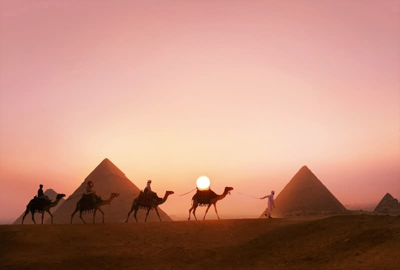Camels Passing From Egyptian Pyramids During Sunset