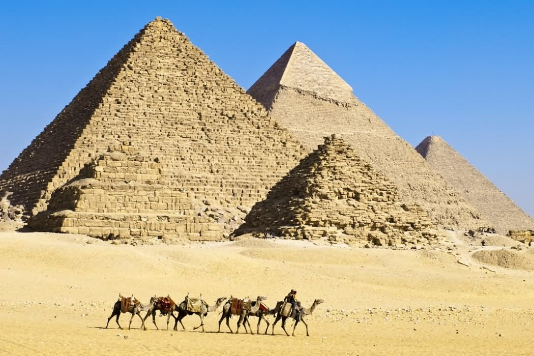 Camels Passing From The Egyptian Pyramids