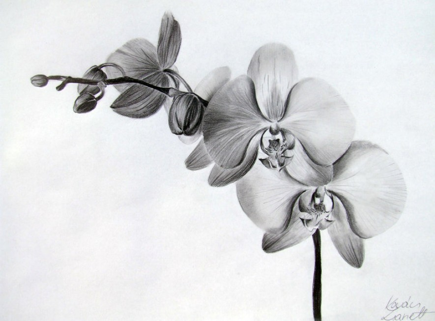 42 Black And White Orchid Tattoos