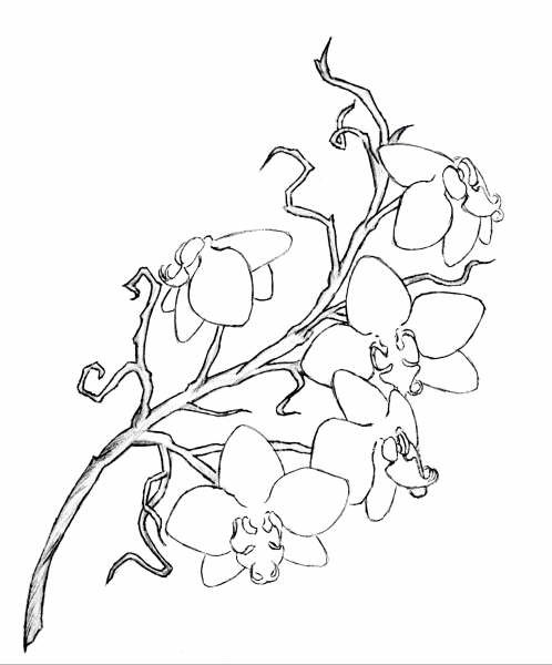 Orchid Flower Line Drawing : Awesome orchid tattoos designs