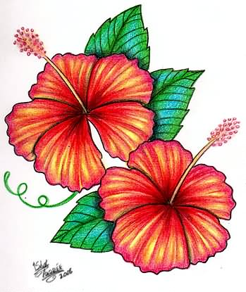 ff3d15bd1add7 Hibiscus Flower Tattoo Drawings - Flowers Healthy