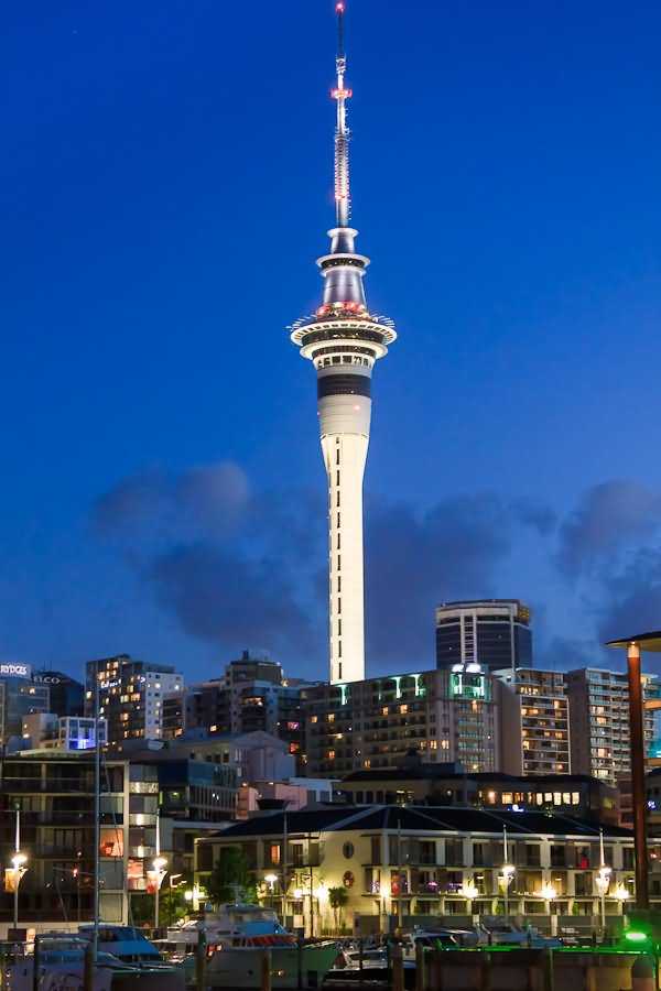 the sky tower and auckland at night. Black Bedroom Furniture Sets. Home Design Ideas