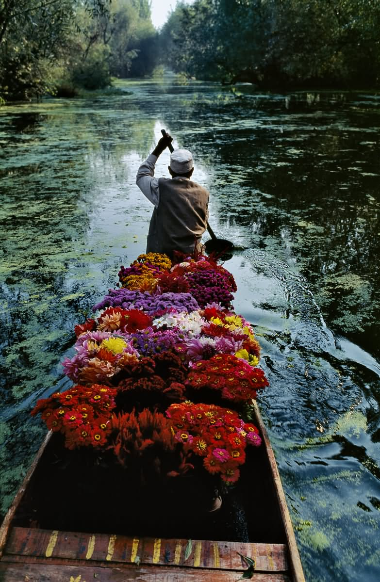 40 most beautiful pictures and images of dal lake jammu kashmir flower seller boating an dal lake kashmir izmirmasajfo