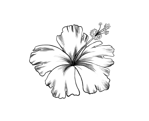 30+ Hibiscus Black And White Tattoos