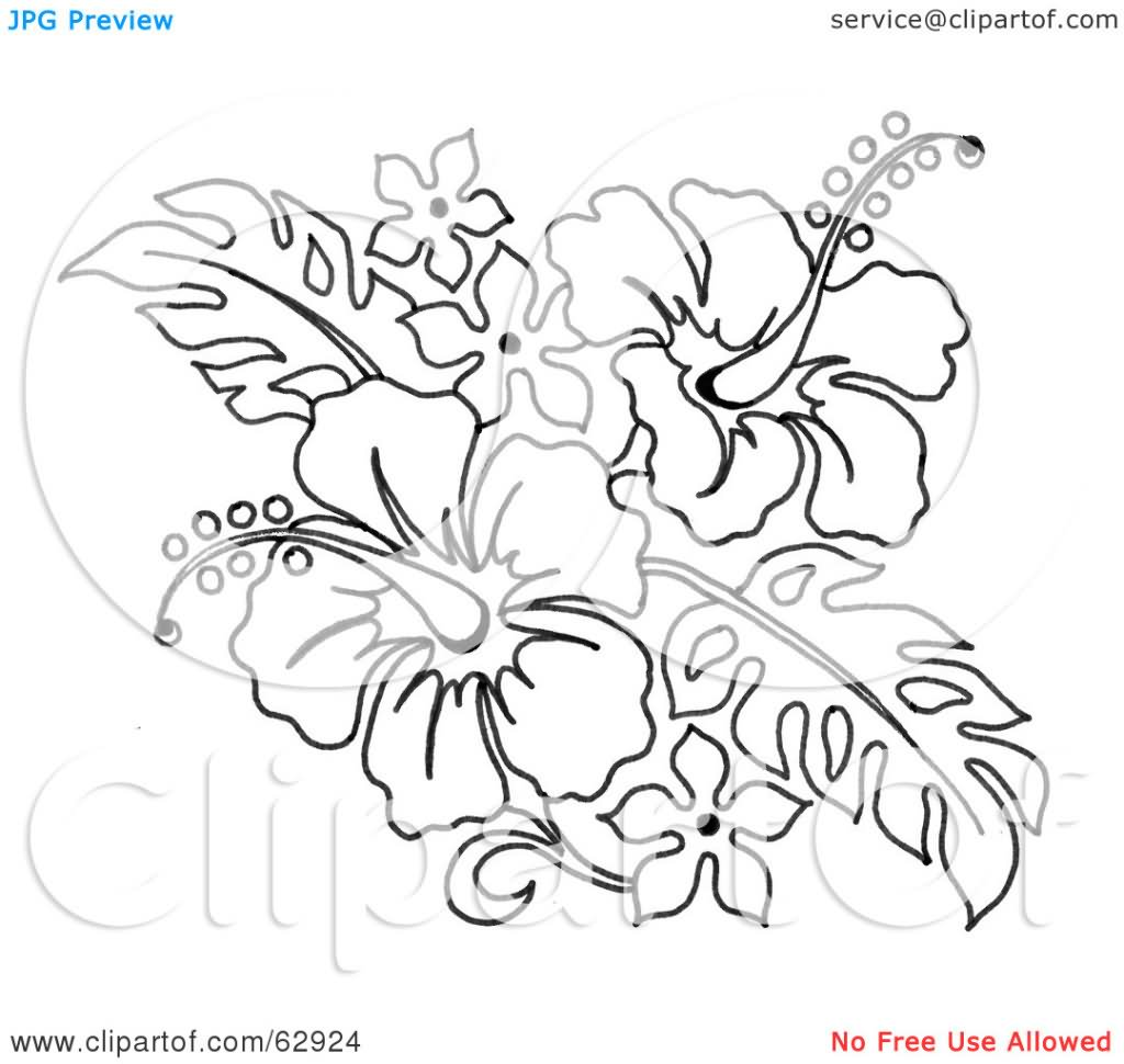 Tattoo Outlines Flowers Black And White: 30+ Hibiscus Black And White Tattoos