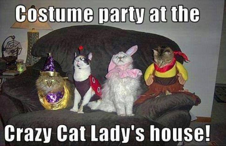 You Funny Lady Meme : Costume party at the crazy cat lady s house funny