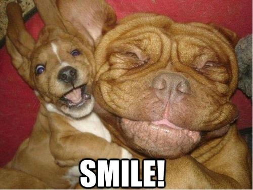 25 Funny Animal Pics and Memes To Make You Smile - Funny ...  |Cute Smile Memes