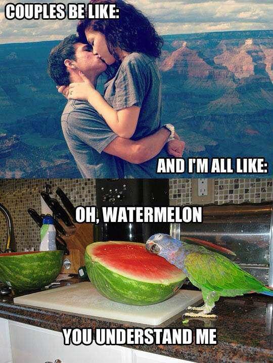 Image of: Picturesboss Oh My Dear Watermelon Love You askideascom Bing Askideascom On Redditcom