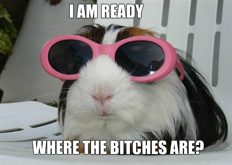 I Am Ready Where The Bitches Are Funny Party Meme Image 40 most funny party meme pictures and photos