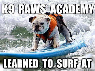 K9 Paws Academy Learned To Surf At Funny Surfing Meme Picture 23 very funny surfing meme images and photos of all the time,Surf Meme