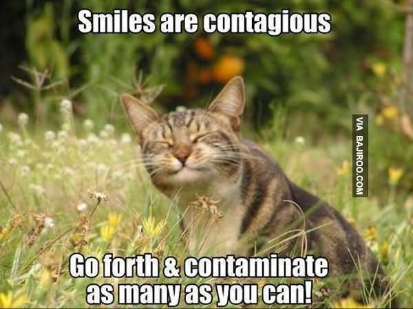35 Funny Smile Meme Images And Photos That Will Make You Laugh  |Cute Smile Memes