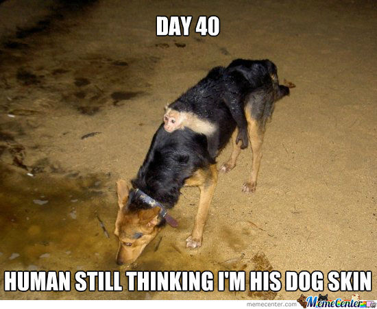 50 Most Funny Camouflage Meme Pictures And Images