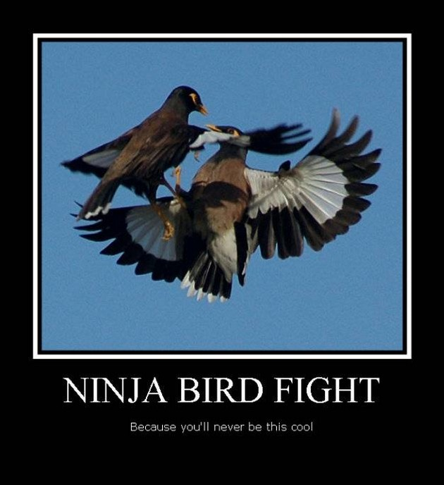 Funny Ninja Bird Fight Meme Picture 25 most funny ninja meme pictures and photos that will make you laugh
