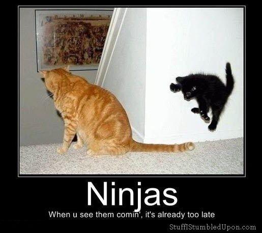 Sneaky ninjas!