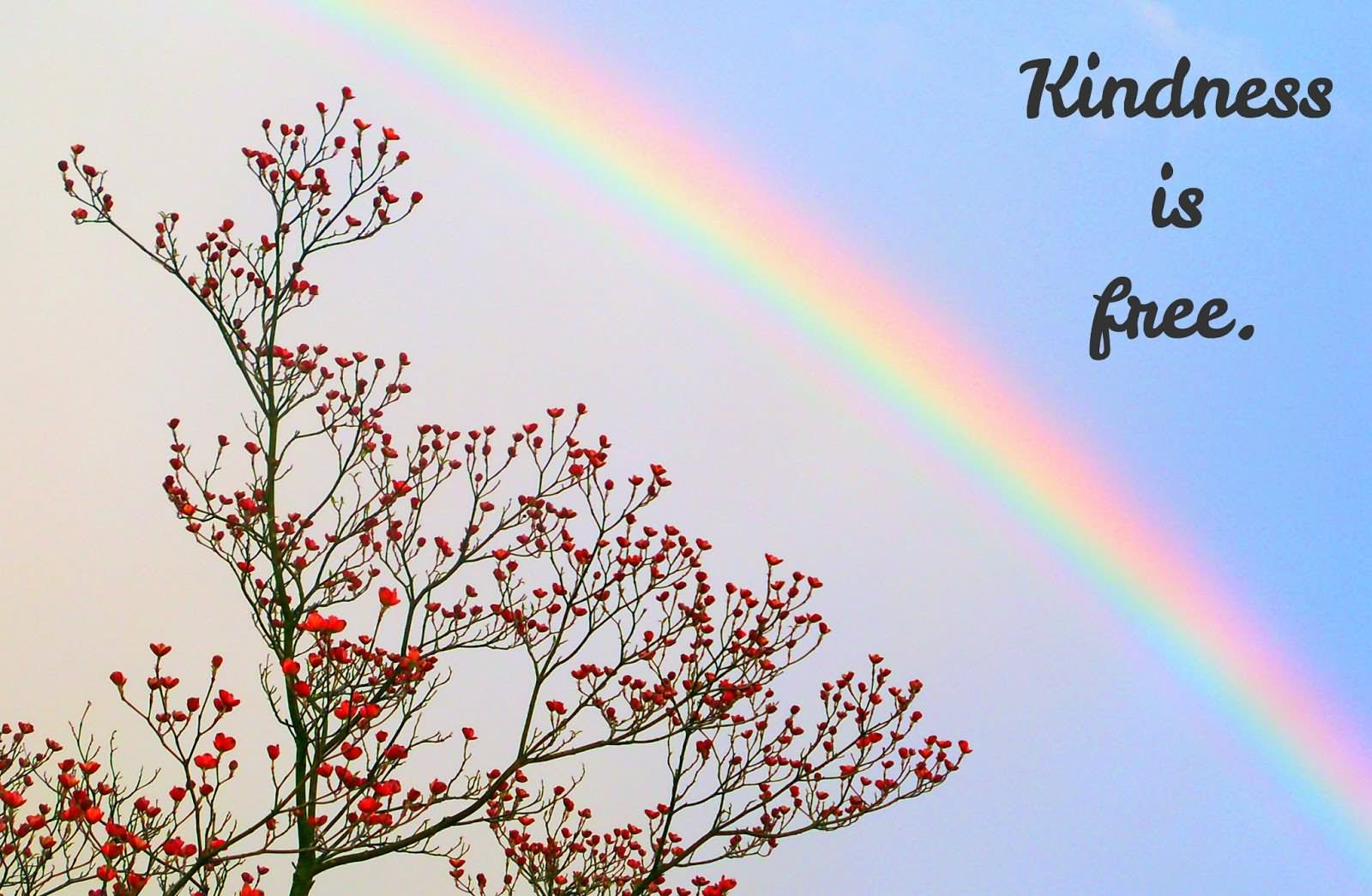 Kindness Quotes: Kindness Quotes