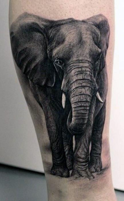 31+ Indian Elephant Ta...