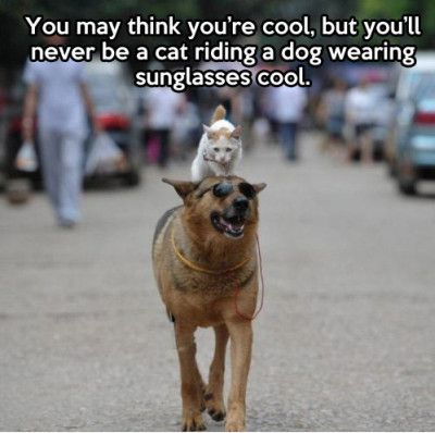 Youtube Cat On Dog Very Funny Cool Meme Photo Askideascom 40 Most Funny Cool Meme Images And Pictures That Will Make You Laugh