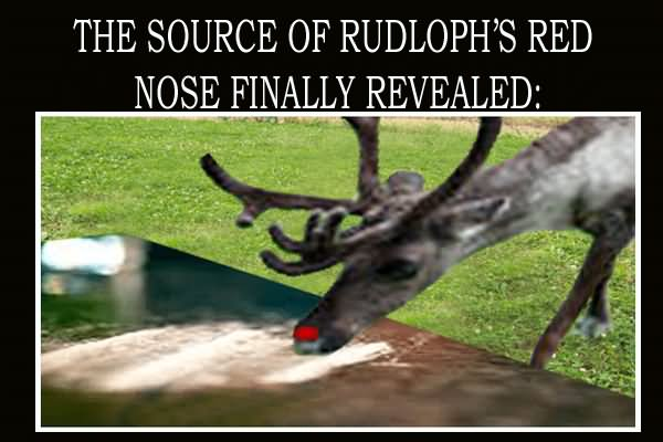 Funny Reindeer Meme : 15 very funny reindeer meme pictures and photos