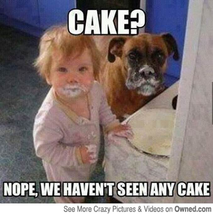 Cake Nope We Haven\u0027t Seen Any Cake Funny Eating Meme Picture