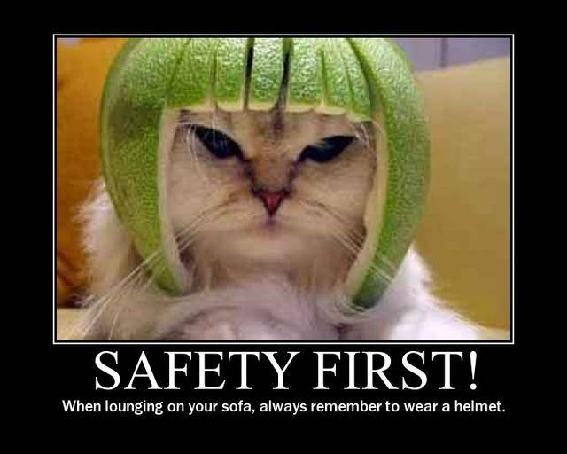 Cat Funny Safety Meme Picture
