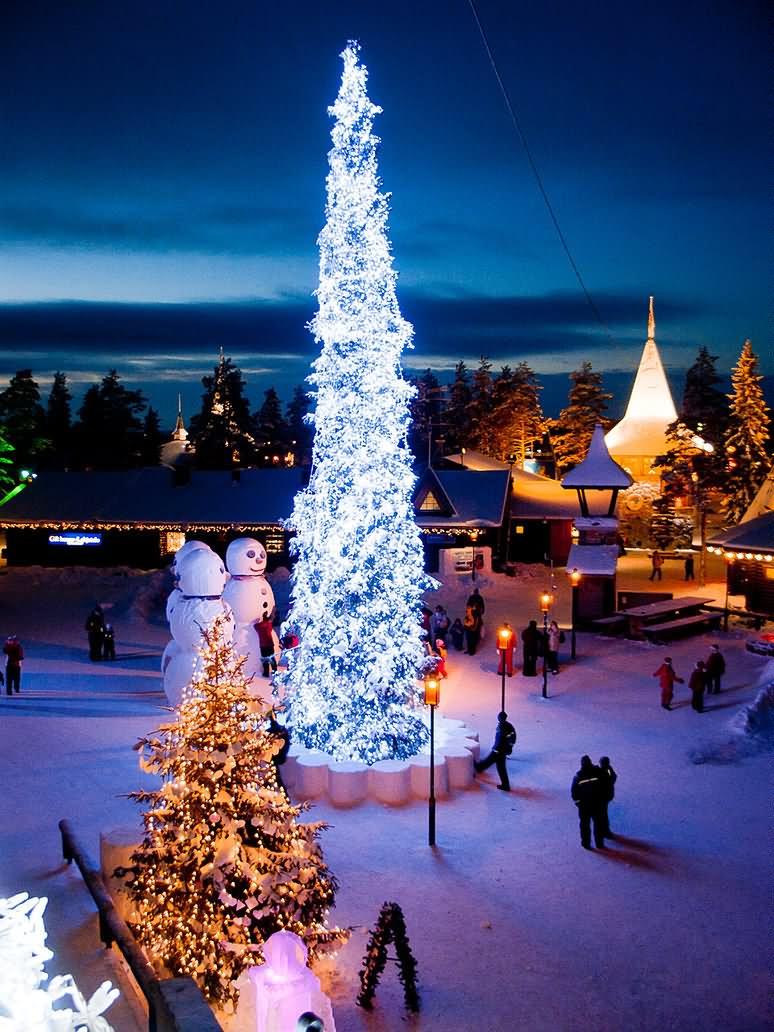 Christmas Tree Illuminated At Night
