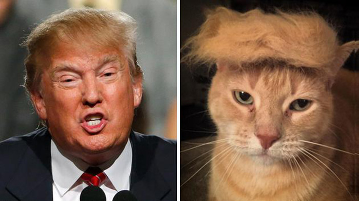Donald Trump Copy Cat Hair Funny Picture