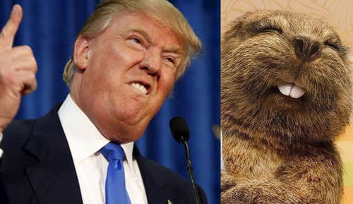 Images diverses - Page 5 Donald-Trump-Copying-Beaver-Face-Funny-Image
