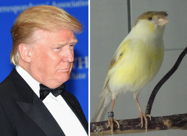 Donald Trump Copying Bird Hair Style Funny Picture