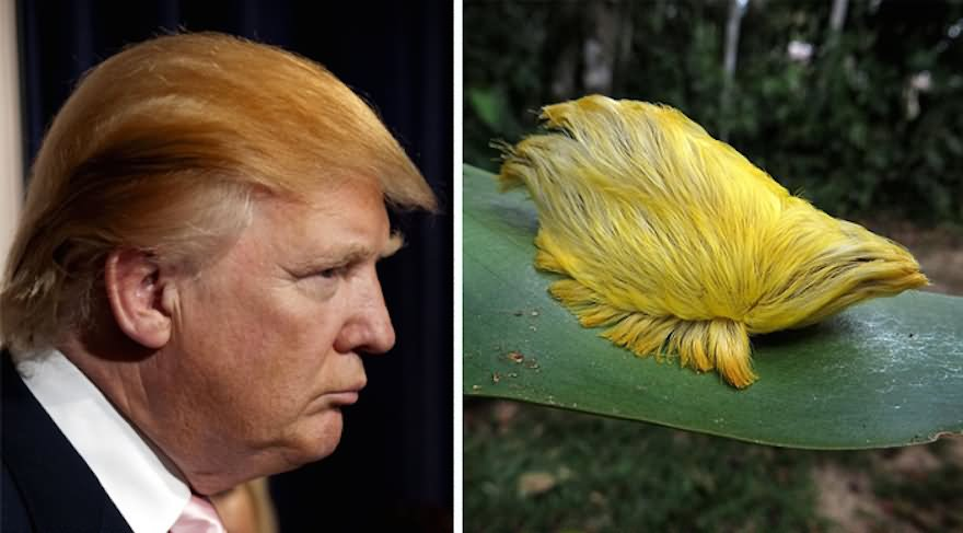 Donald Trump Hair Looking As Bird Funny Picture