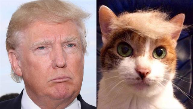 Donald Trump Funny Hair Memes : Donald trump funny hair pictures that make you laugh
