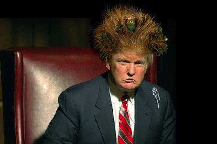 Donald Trump With Nest Hair Style Very Funny Image