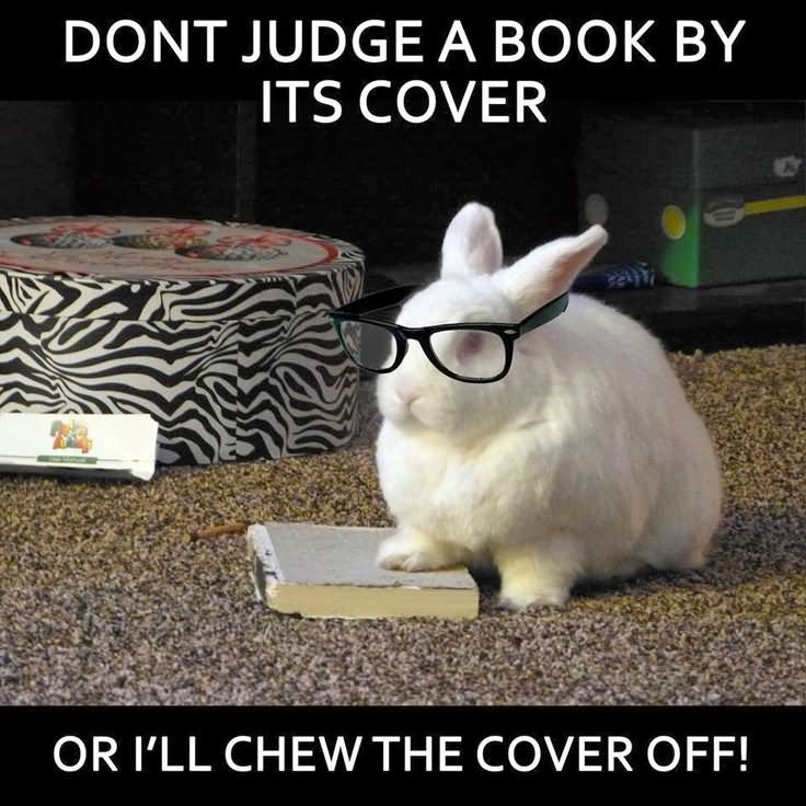 Funny Meme Cover Photos : Very funny bunnies meme pictures of all the time