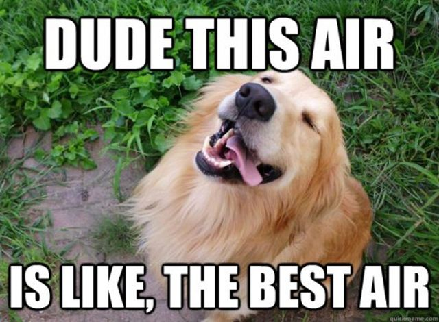 Fun Dog Meme : 47 most funniest dog memes that will make you laugh