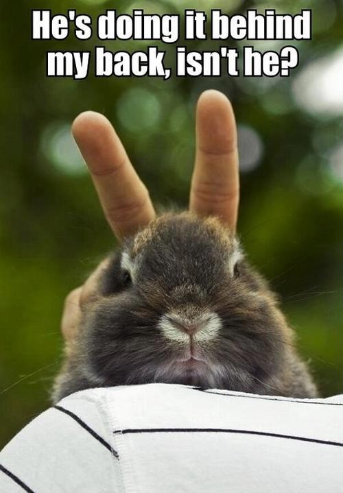 48 Very Funny Bunnies Meme Pictures Of All The Time